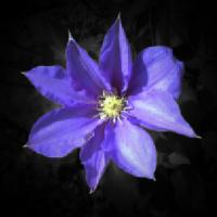 flower #b