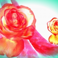 Two roses.