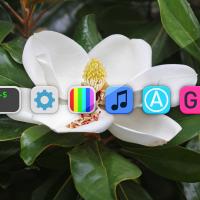 Introducing Magnolia