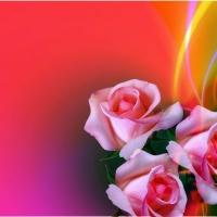 Three roses.