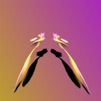 golddustmagneticbutterfly Wp