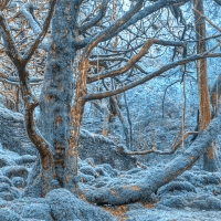 Sapphire Forest - HDR